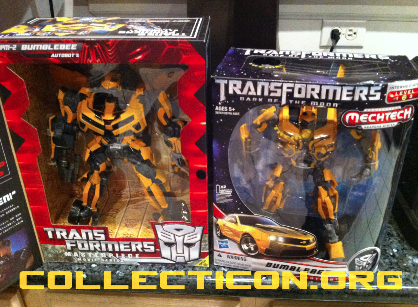 DOTM Leader Bumblebee in the wild – it's a buzzy kind of day!